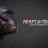 Primate Anatomy Part 2^Sculpting the Chimp