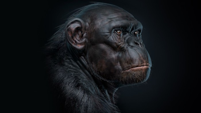 Chimp_Sculpt_Chapter_10
