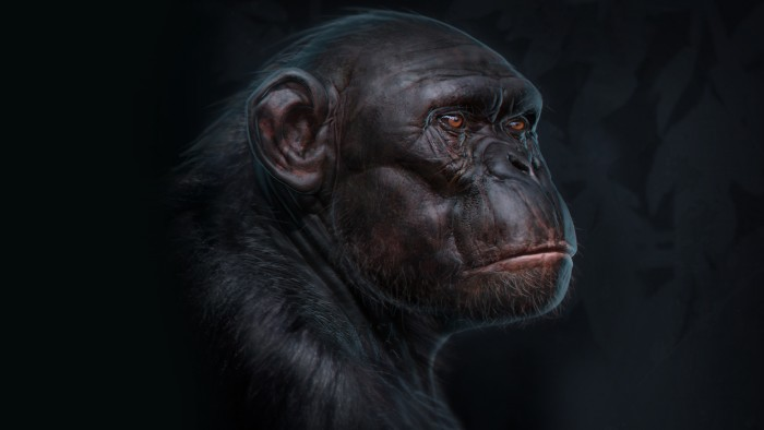 Chimp_Sculpt_Chapter_11