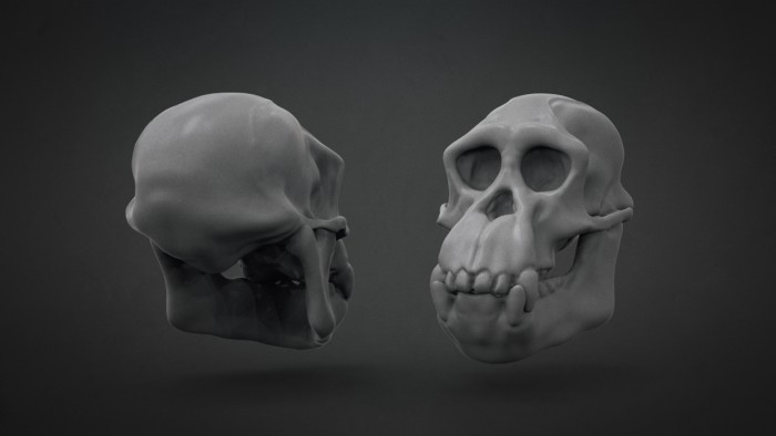 Chimp_Skull_Chapter_02
