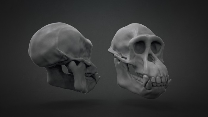 Chimp_Skull_Chapter_03