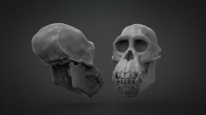 Chimp_Skull_Chapter_04